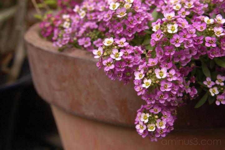 flower pink pot 花 꽃 fleur tokio