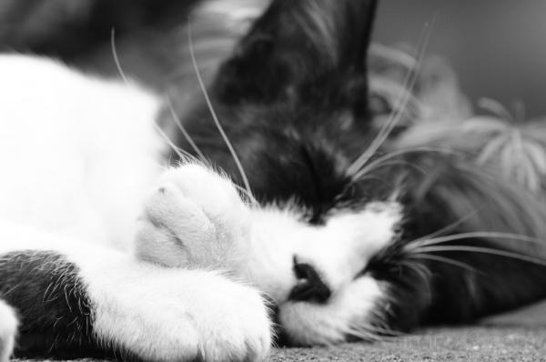 cat 猫 ねこ chiba 千葉 黒猫写真 黒猫