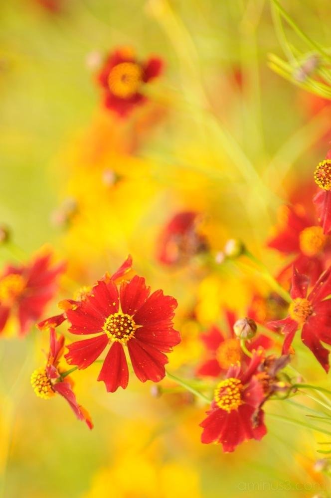 flower 花 chiba 千葉 sanuki 佐貫