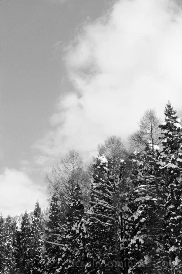 landscape mountains snow 木 nagano 山 雪 長野 景色 trees