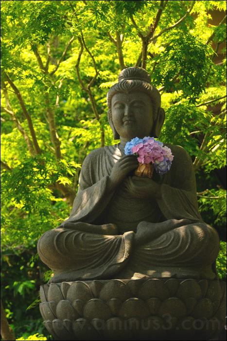 buddha statue holding hydrangea, kamakura