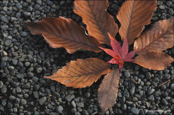 symmetry from leaves 均整 (harajuku)