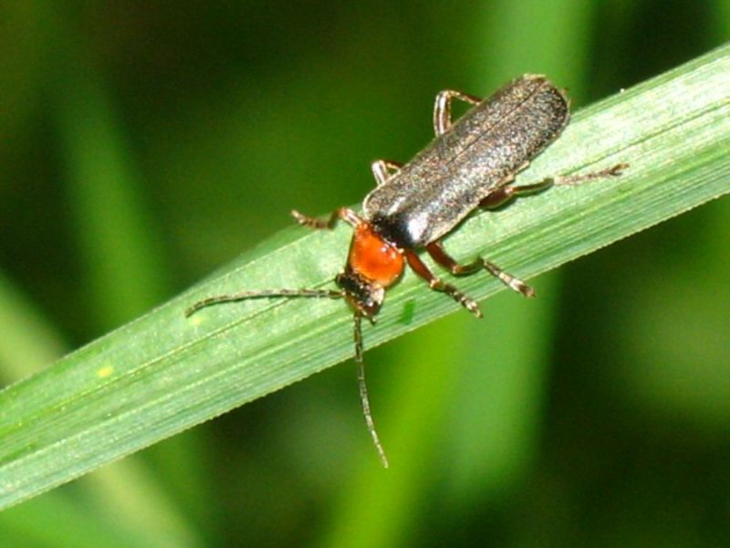 An Insect
