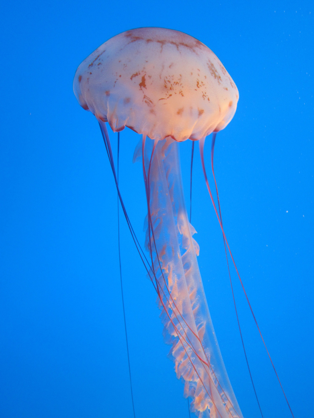 purple-striped jelly
