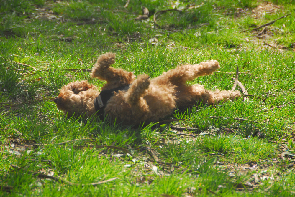 scratching on the grass