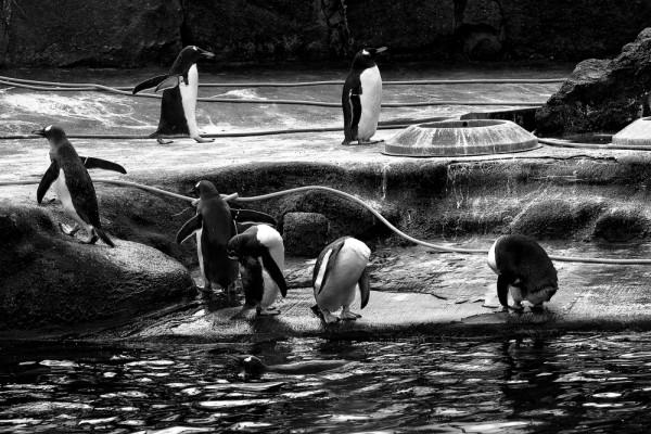 Edinburgh Zoo, Scotland