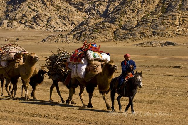 camel, relocation, Shepherd, wild duck lake, Xin J