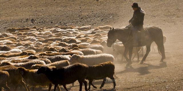 Horse, Sheep, Shepherd, Xin Jiang