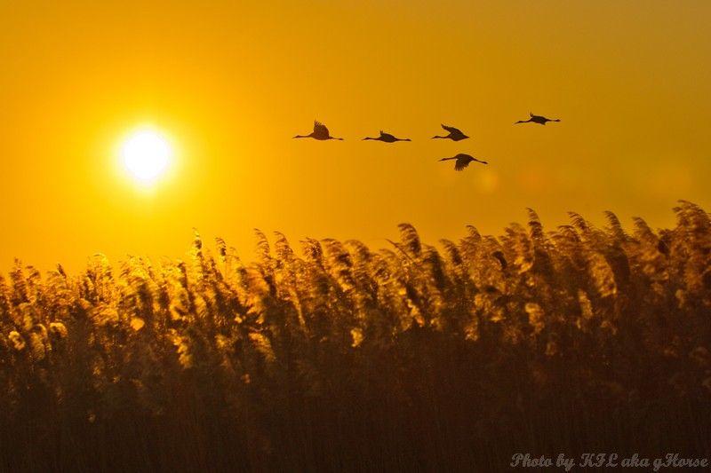 birds, sun rise, orange, xiang hoi, Jilin, fly, 吉林