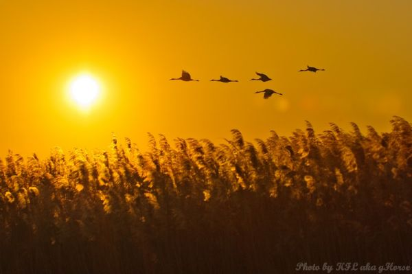 birds, sun rise, orange, xiang hoi, Jilin, fly, 吉林