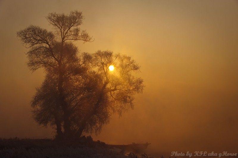 wu shong island, Jilin, 吉林, 雾从岛, tree, sun rise, m