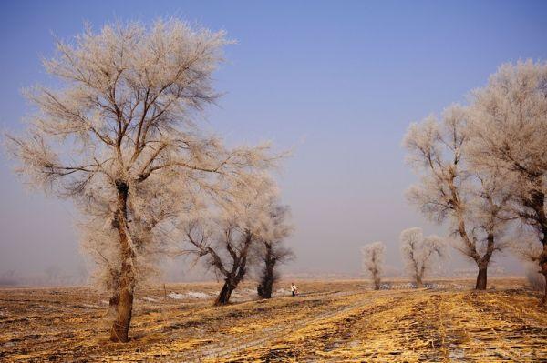 wu shong island, Jilin, 吉林, 雾从岛, field, tree, blue