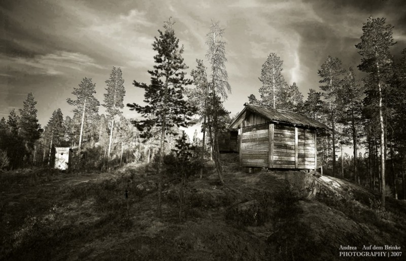 shack sweeden tree wood forest