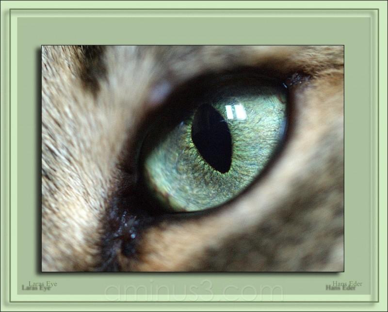 laras eye