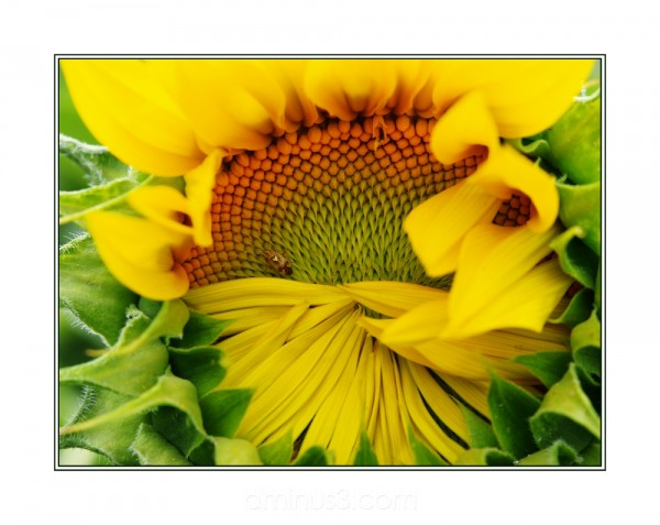 animal insect sunflower yellow