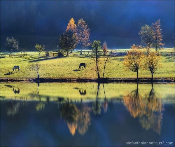 Herbstbild mit Pferden