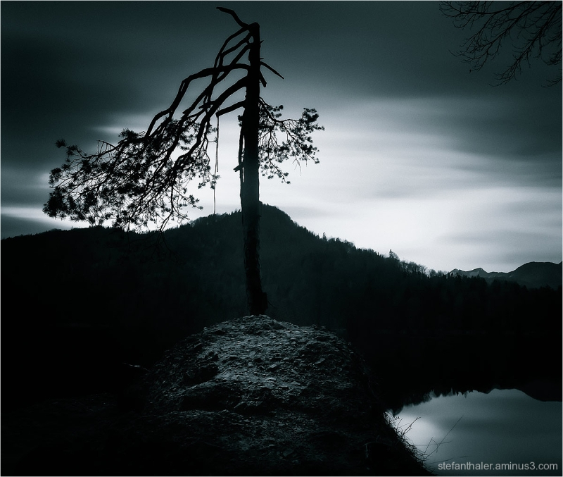 Hechtsee, Magic tree,
