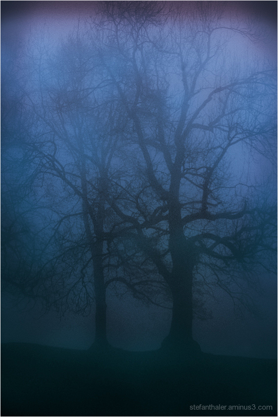 mist, Nebel