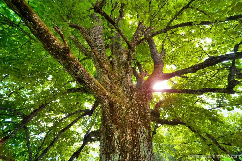 tree, Baum, Licht, Gott