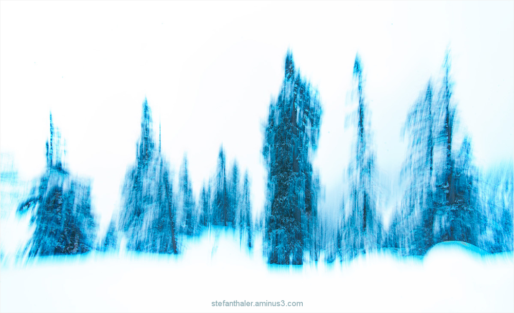 winter forest, wald