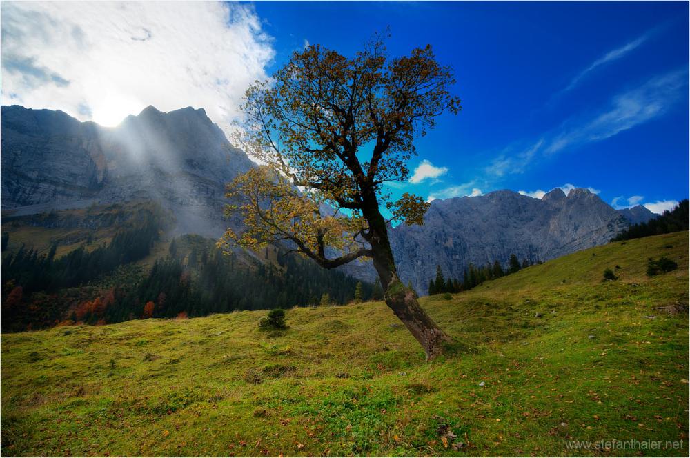 Bergahorn, Ahornboden, Eng Alm, Laliderer