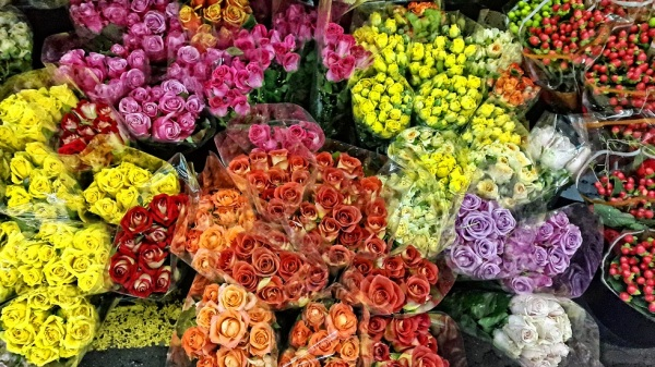 floral rose colorful