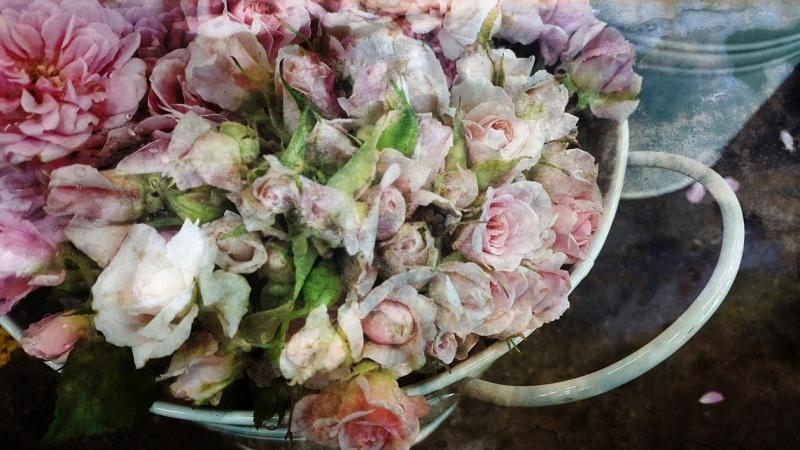 floral rose pink