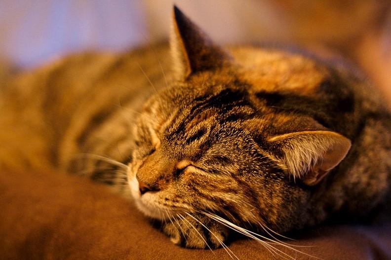 Sleeping Twister