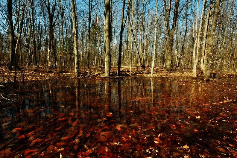 Red Leaves in Water