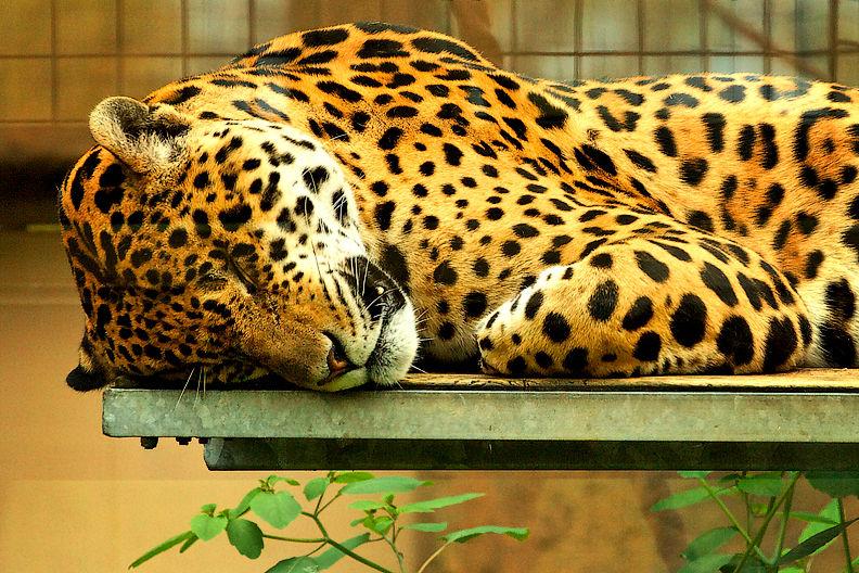 Toronto Zoo '09  06