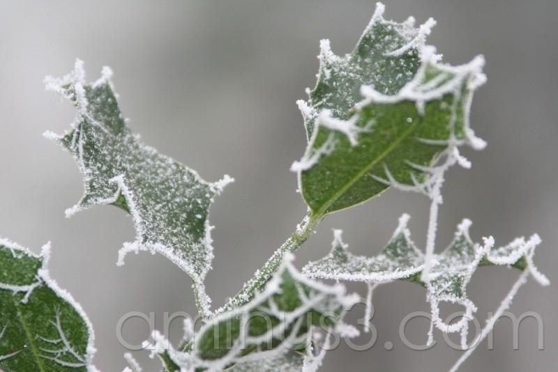 Sophienhöhe im Winter
