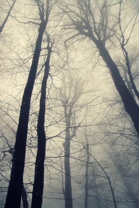 Fog & Trees