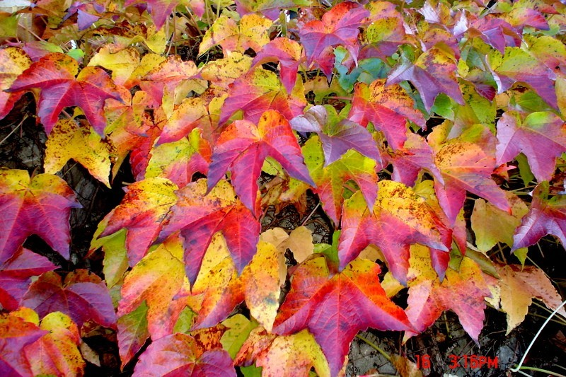 Herbst!
