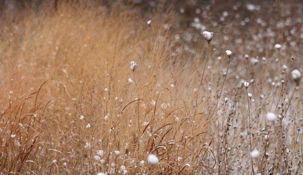 delicate grass