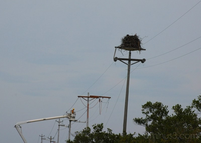 Ospreys and Men At Work