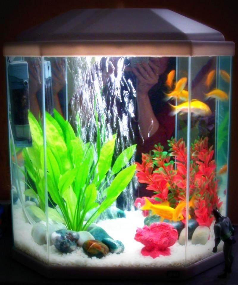 sarah's fishtank