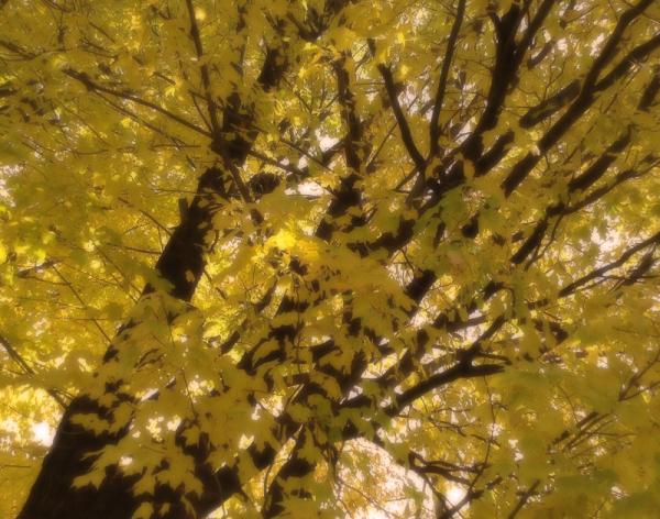 souvenir de mon automne