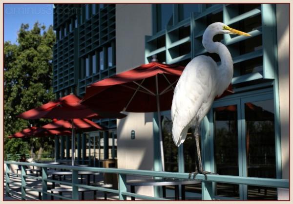 white heron water fowl florida