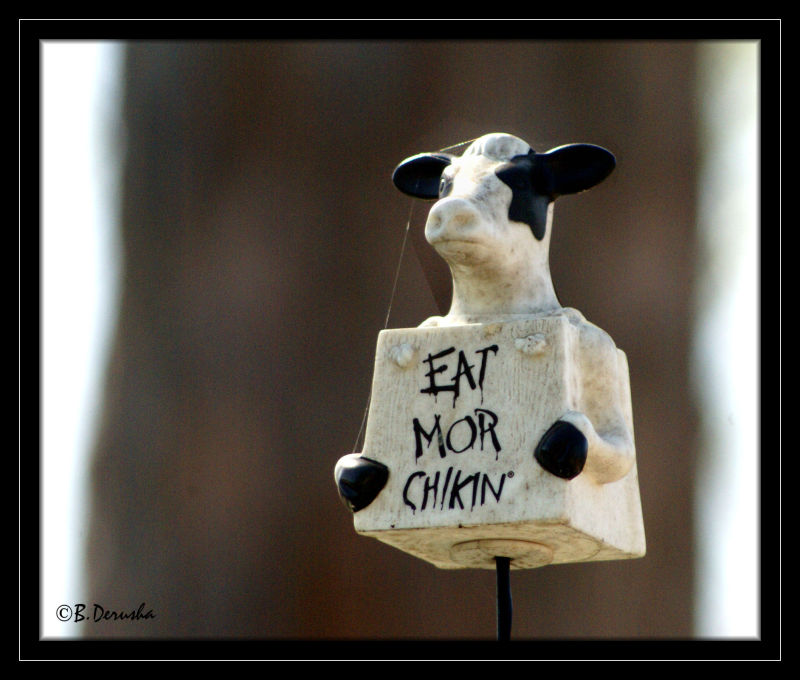 Eat More Chikin