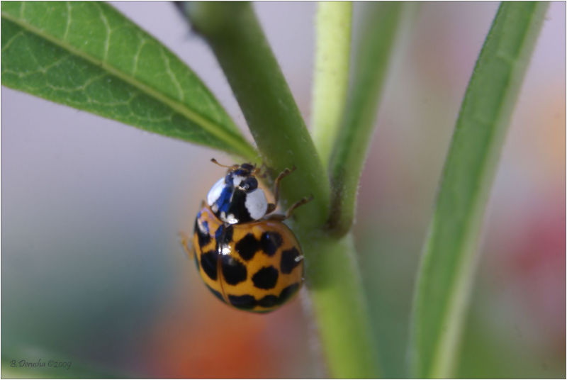 First Ladybug For Judy