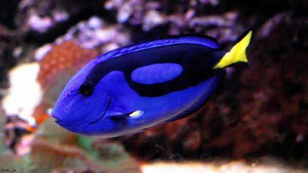poisson,aquarium,sea-life,val-d'europe