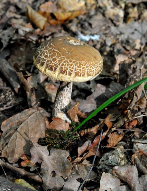 Champignon,foret,nature