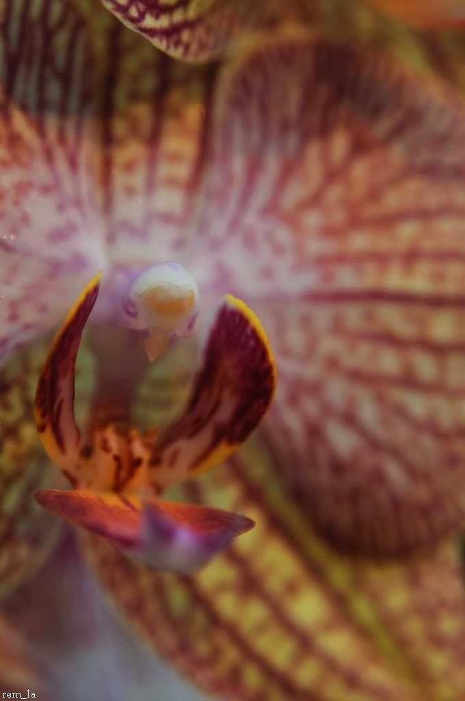 orchidée,parc,floral,orleans,fleur