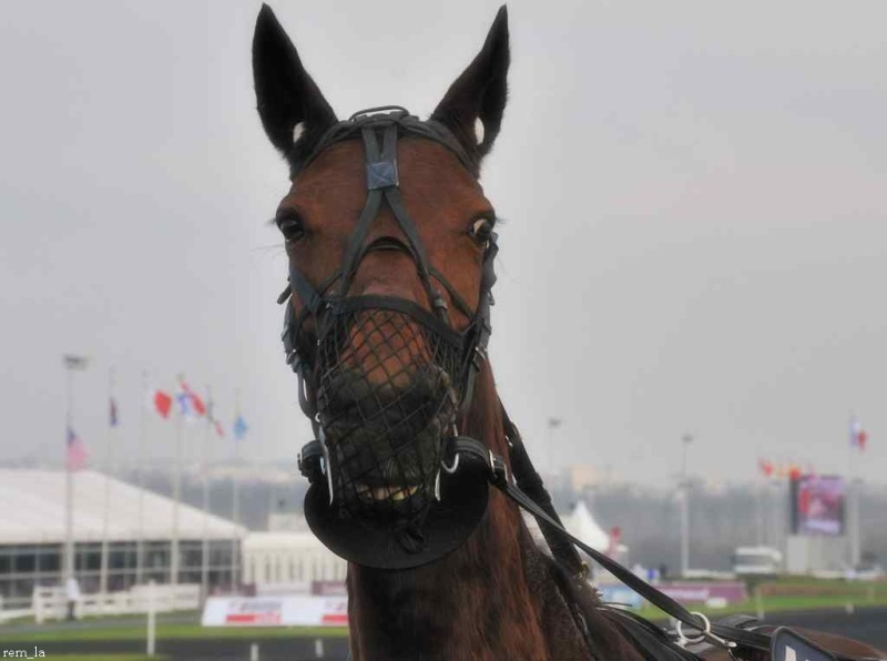 cheval,course,amerique,trot