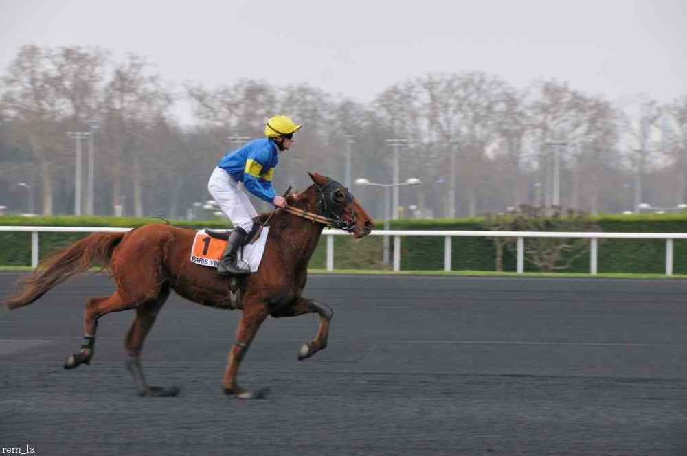cheval,course,amerique