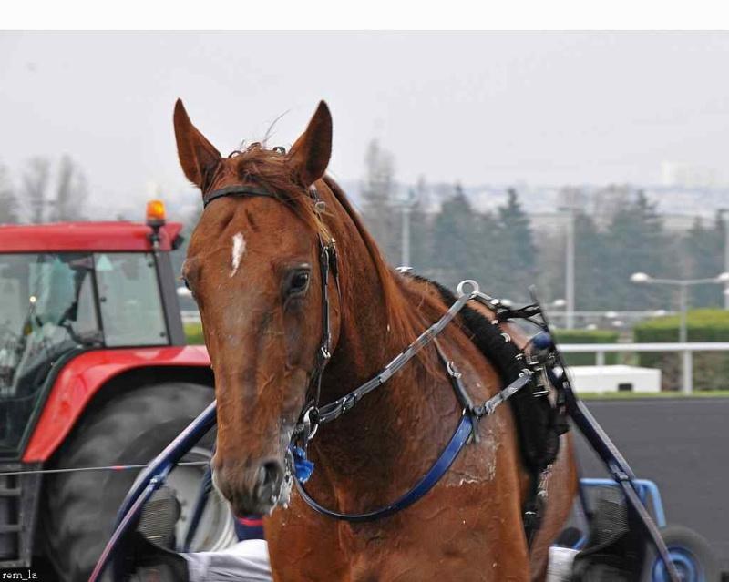 cheval,course,amerique,trot