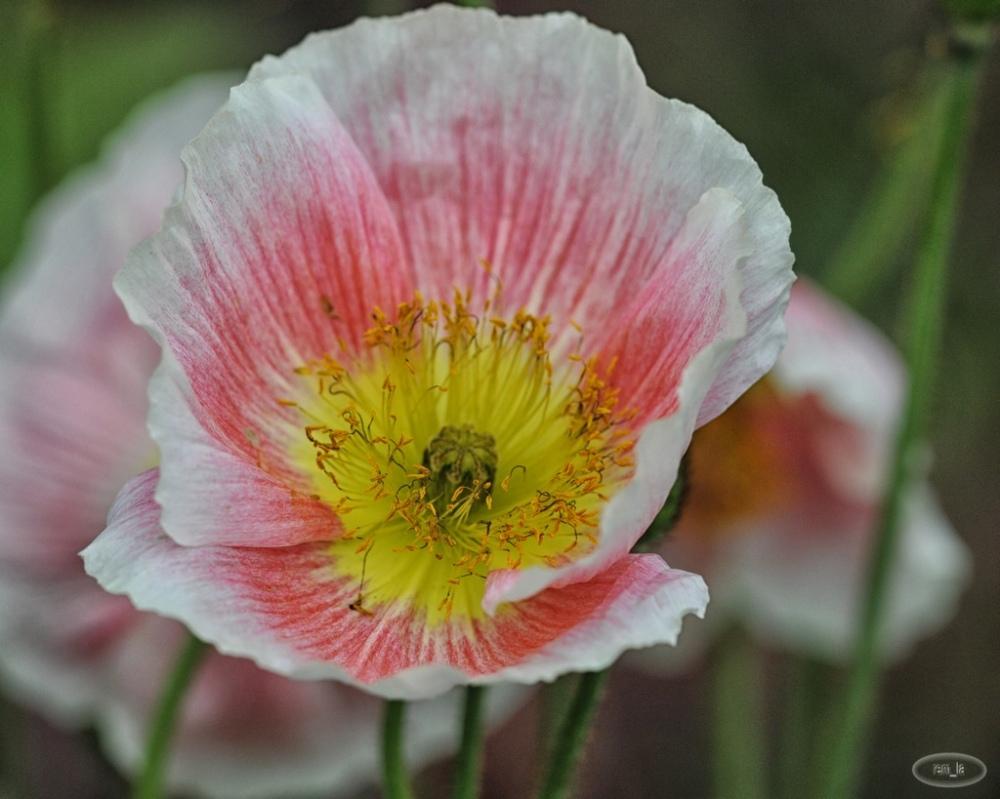 printemps,plante,fleur