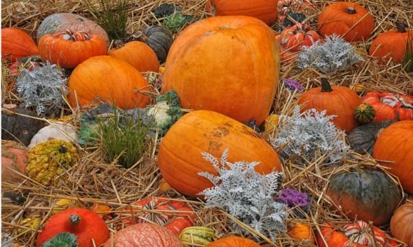 curcubitacé,légume,halloween,ancien