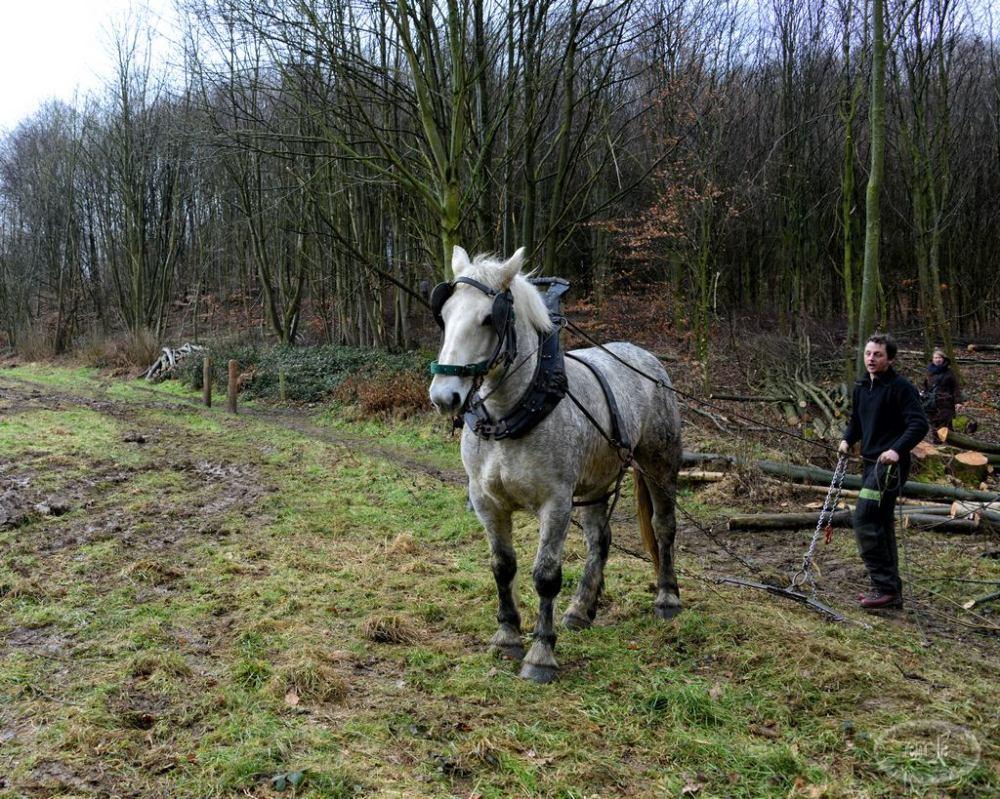 debardage,foret,cheval
