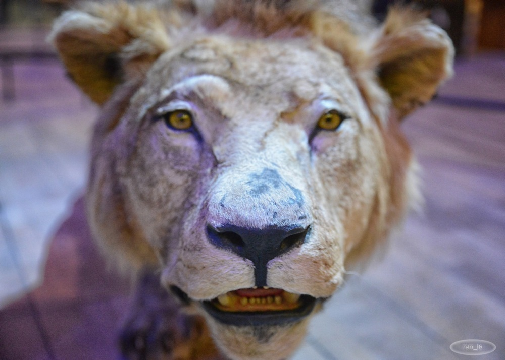 musée,paris,animal,galerie,taxidermie